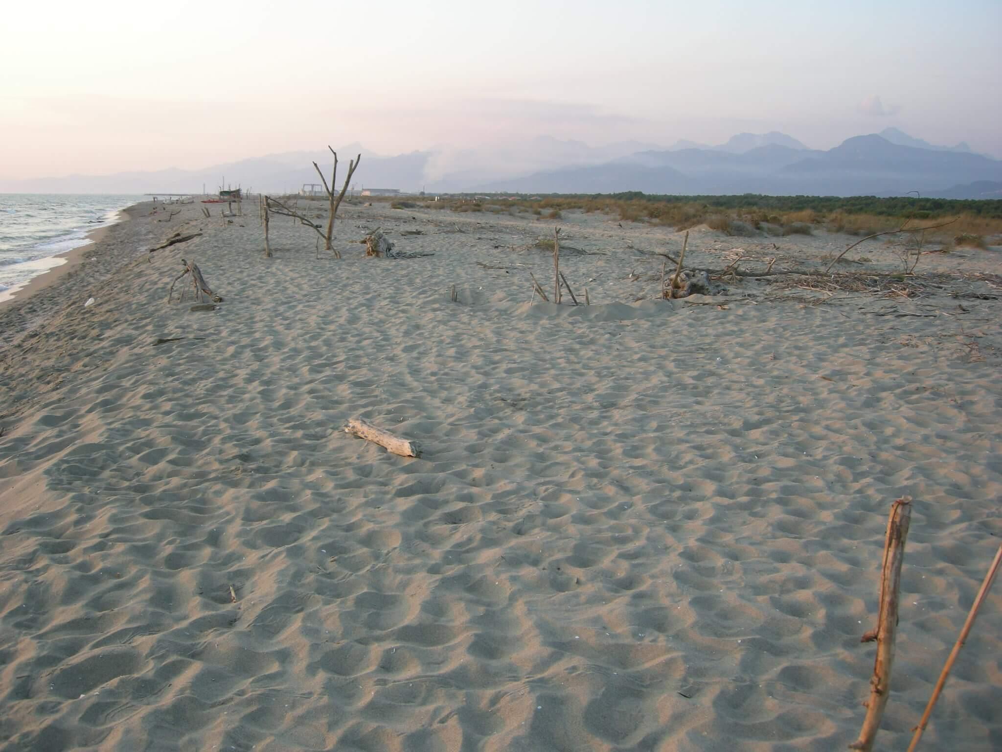 Foto di spiaggia della lecciona for Planimetrie della cabina del lago